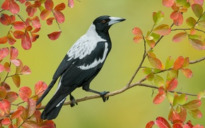Picture bird, branch, feathers, beak, large