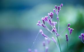 Picture flower, drops, macro, sprig, lilac, gossamer