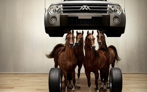 Wallpaper horse, flooring, 153, wheel