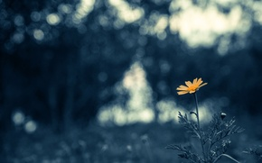 Picture flower, petals, bokeh