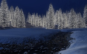 Picture winter, snow, lights, new year, Tree