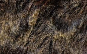 Picture texture, fur, animal texture, background desktop