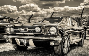 Picture Ford Mustang, GT350H, 1965, the front