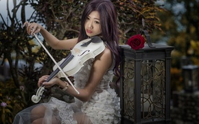 Picture girl, mood, violin, rose, lantern, Asian