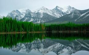Picture mountains, lake, reflection, Banff, Herbert Lake