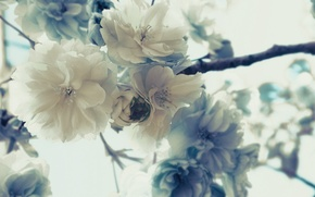 Picture macro, flowers, branches, nature, tree, plant, petals, Sakura, buds, flowers
