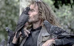 Picture birds, man, friendship, pigeons, friends