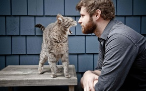 Picture cats, male, howl, guy, wild, man, funny, funny, guy, Howl, bossy cat, gnarly, wild