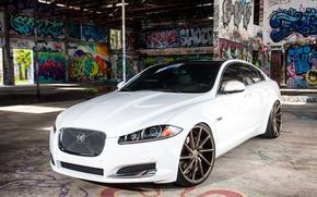 Picture Jaguar, White, Graffity