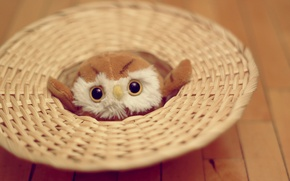 Picture eyes, owl, toy, soft