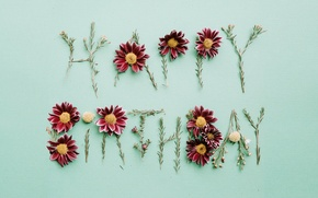Picture flowers, background, holiday