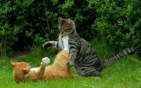 Picture cats, cats, kung fu kitteh
