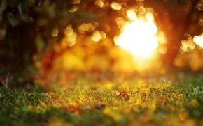 Picture autumn, grass, leaves, macro, trees, sunset, nature, the evening, blur, bokeh