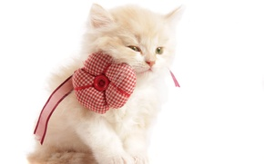 Picture white, flower, kitty, background, tape, beige, button