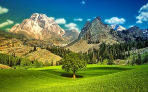 Picture the sky, grass, trees, landscape, mountains, valley