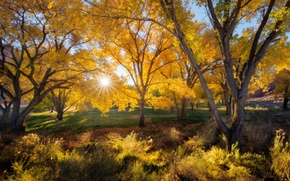 Picture autumn, leaves, the sun, rays, trees, nature, time of the year