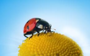 Picture beauty, Ladybug, leaf, nature