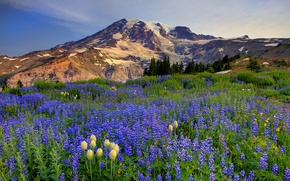 Picture flowers, snow, mountains, nature, trees, meadow, the sky, clouds