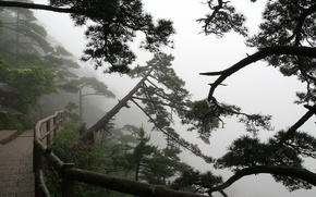 Wallpaper Trees, fog, trail