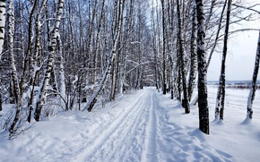 Picture winter, forest, snow, nature, Landscape, birch