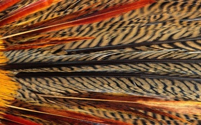 Picture texture, animal texture, background desktop, feathers of exotic birds