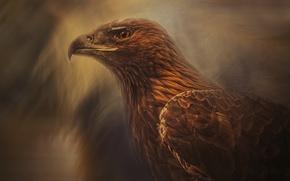 Wallpaper beak, look, predator, bird