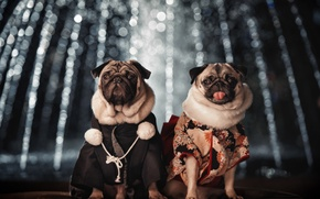 Picture dogs, pair, costumes