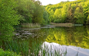 Picture greens, summer, grass, water, trees, reflection, river, the reeds, shore, the bushes