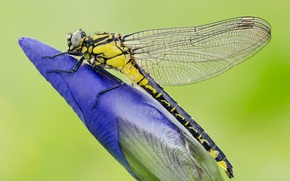 Picture flower, plant, wings, dragonfly, insect