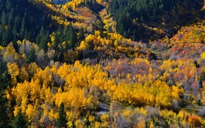 Picture autumn, forest, trees, colors, panorama, forest, trees, panorama, Autumn, fall