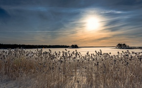 Picture winter, lake, morning, reed