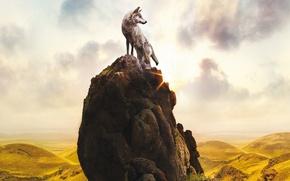 Picture rock, sky, clouds, sun, limbo, movie, animal, wolf, stones, interior, moss, vegetation, sunbeams, The Last …