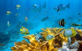 Picture sea, fish, corals, the bottom of the sea