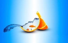 Picture orange, aquarium, fish