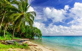 Wallpaper palm trees, paradise, shore, palms, beach, sea, sand, sea, sand, shore, beach, summer, tropical