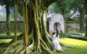 Picture tree, garden, dress, walk, Asian