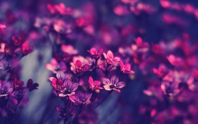 Picture flowers, pink, purple, beautiful
