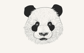 Picture head, Panda, panda, white background. minimalism