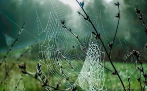 Picture autumn, grass, drops, macro, fog, Rosa, web, September