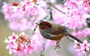Picture tree, bird, branch, spring, flowering