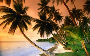 Wallpaper sea, palm trees, the ocean, grass, sunset, sand