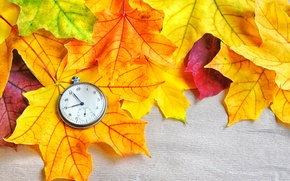 Picture autumn, leaves, macro, photo, pocket watch