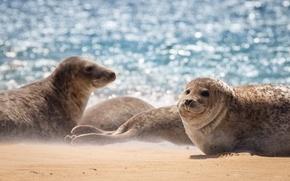 Wallpaper sea, seal, nature