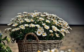 Picture Flowers, Basket, Basket with Flowers