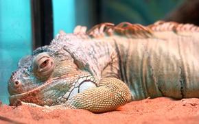 Picture aquarium, zoo, Varan