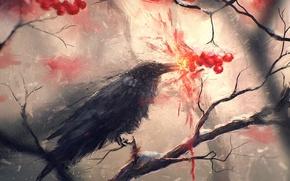 Picture bird, branch, art, Raven, crow, Rowan