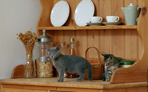 Picture Cup, kittens, plates, dishes, shelves