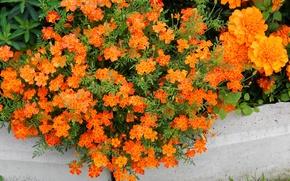 Picture flowers, Wallpaper, wallpaper, wallpapers, orange