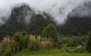 Wallpaper New Zealand, mountains, fog, trees, the bushes, forest