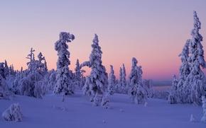 Picture winter, snow, trees, sunset, Finland, Finland, Lapland, Lapland, Levi, Levi
